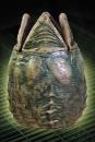 Alien Aufbewahrungssystem mit Bewegungssensor Xenomorph Ei 53 cm